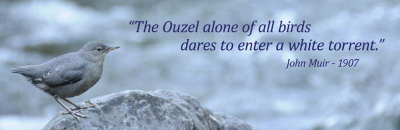 Ouzel